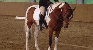 alderfarn vii stallion