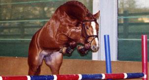 corravale stallion