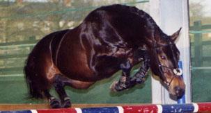 dick z stallion