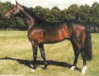 Horse Drossan