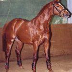 corravale stud stallion