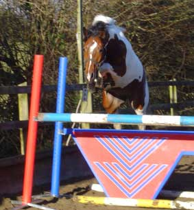 alderfarn showjump