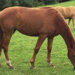 carma 2 year old horse