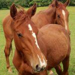 carmahead 1 year old horse